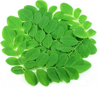 Photo of Moringa Leaves