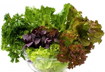 Different Dark Leafy Green Vegetables
