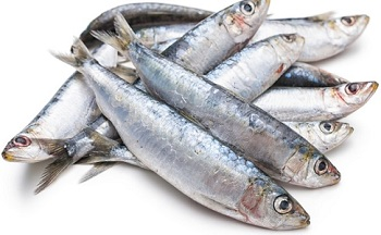 Photo of Fresh Sardines